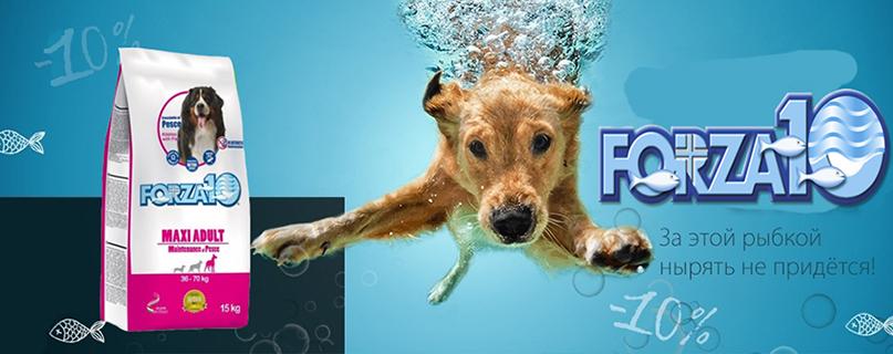 Скидка 10 % на корма Forza10 для собак и кошек